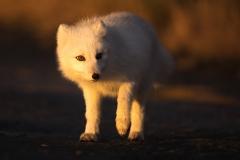 Arktis Herbst